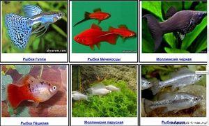Descrierea peștilor vii