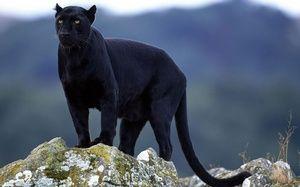 În cazul în care Panther Homes