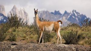 Habitatele Lama