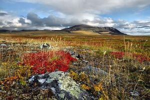 Caracteristici ale climei și naturii tundrei