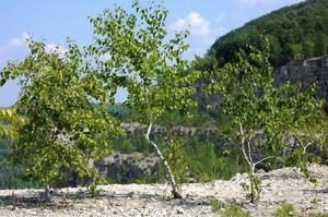 Lista și descrierea plantelor, ierburilor și arbuștilor din tundră