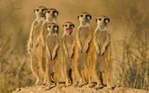 Desert Animals Descriere