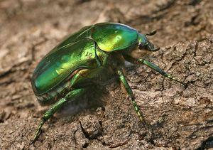 Lupta împotriva insectelor