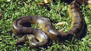Aspectul lui python